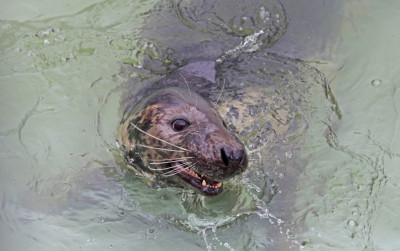 Зоопарк приглашает на тематический день «От тюленя до кита»