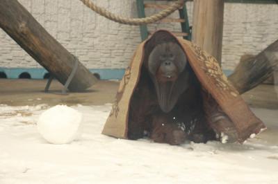 Зоопарк приглашает на экскурсию из цикла «Другой зоопарк»
