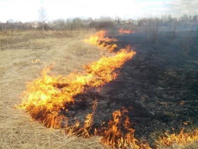 В связи с теплой погодой создается угроза возникновения лесных пожаров