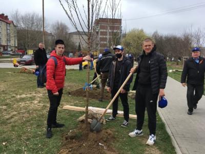 В Светлогорске единороссы приняли участие в высадке деревьев